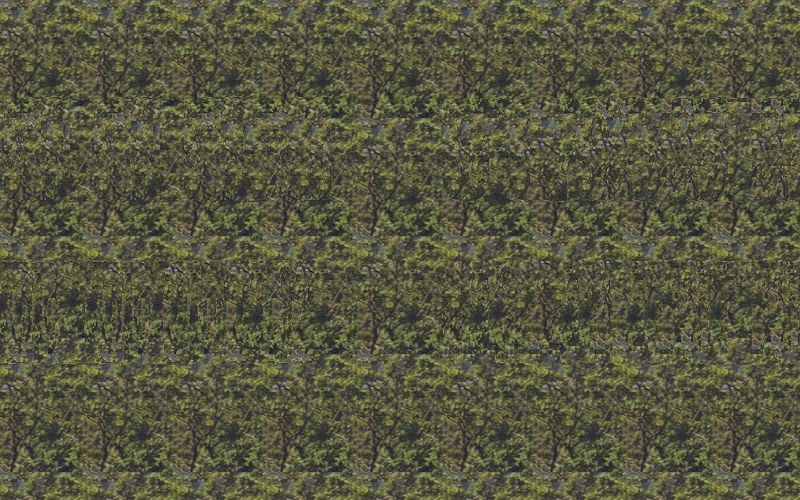 GCTV41 Magic Eye View